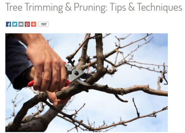 when-to-prune-trees