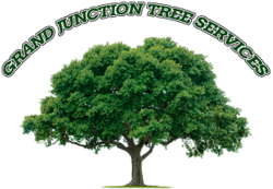 Tree Trimming & Cutting, Stump Removal, & More | Colorado, USA | All About Trees LLC